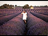 Surrounded by lavender